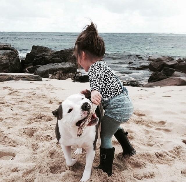 adore Lani Barbra Dog bond shin - tullyandthechief | ello