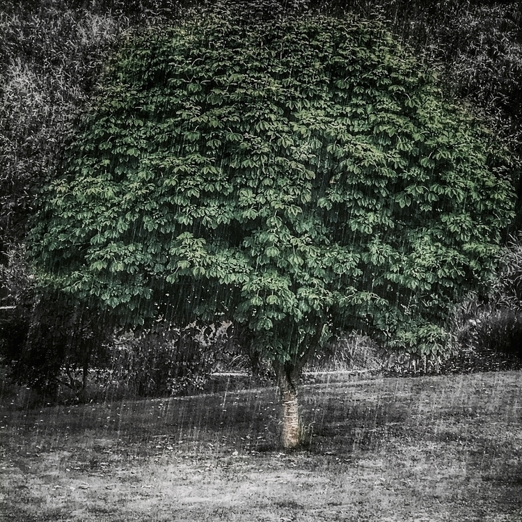 nature, lesscolor, rainyday, maybenotsummer - willkreutz | ello