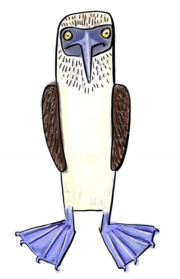 Blue Footed Booby - bird, illustration - reneeleigh | ello