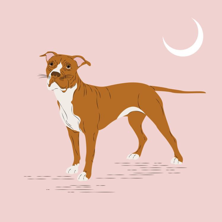Pitbull Digital 2017 - illustration - xeezles | ello