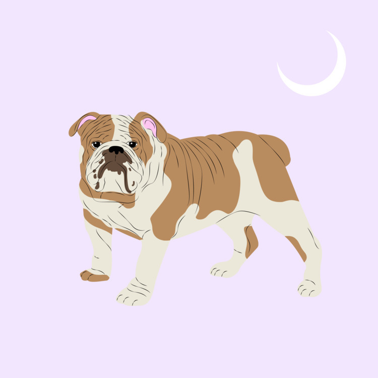 Bulldog Digital 2017 - illustration - xeezles | ello