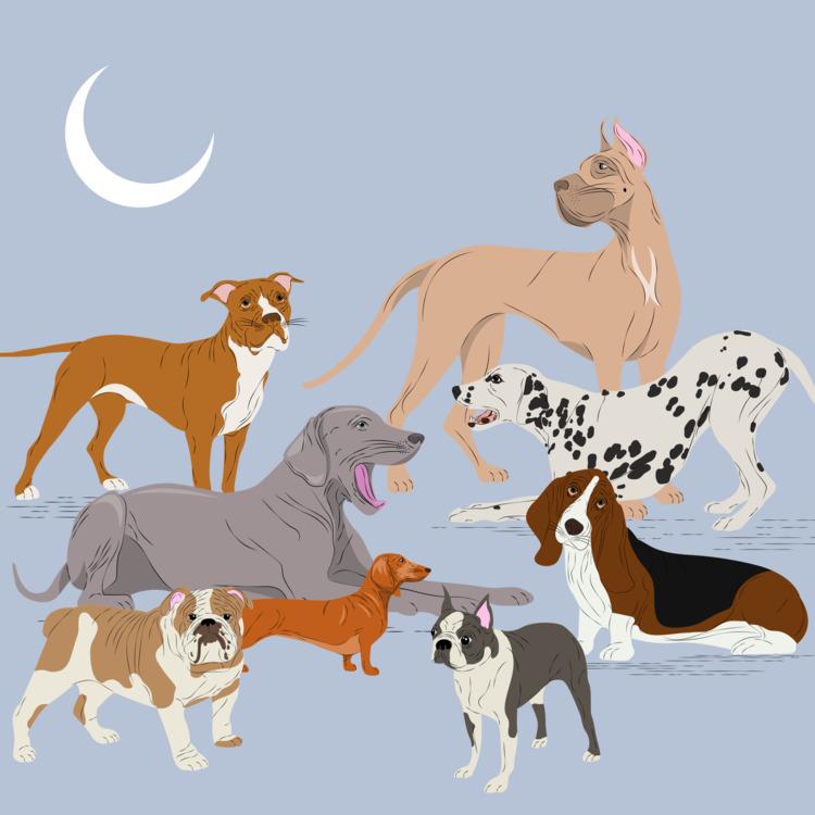 lots fun drawing doggos days - illustration - xeezles | ello