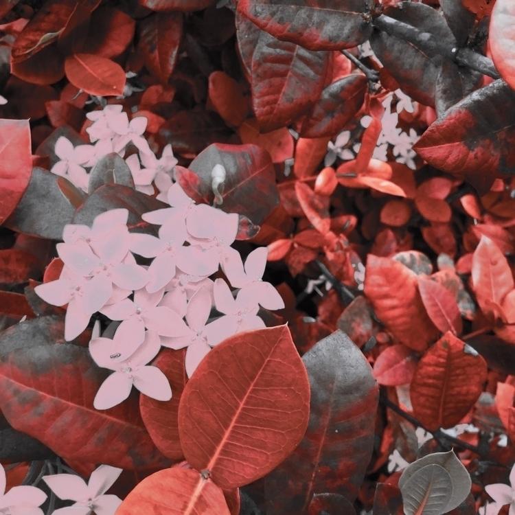 Flowers Bush Apps - mikefl99, ello - mikefl99 | ello