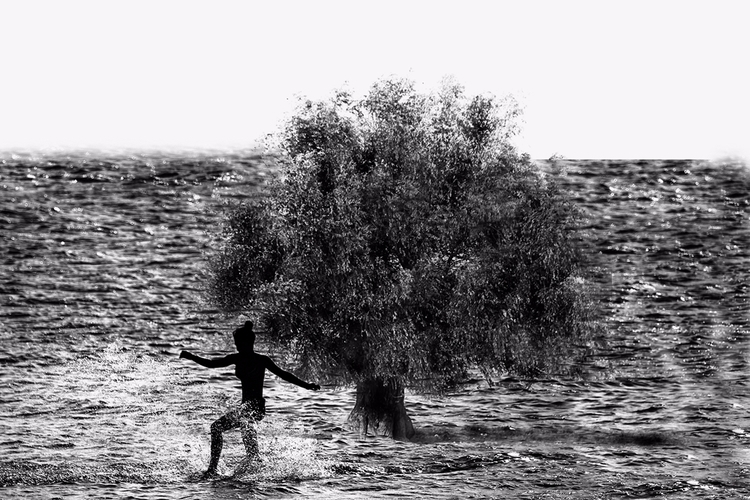 tree water - fantasy, surreal, surrealism - cornelgin | ello