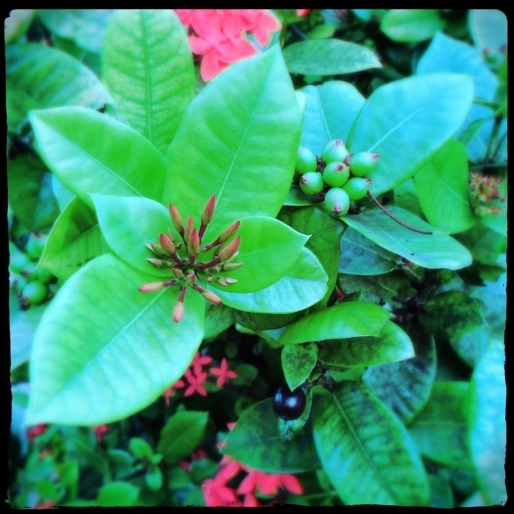 Summer Flowers Blooming Bushes  - mikefl99 | ello