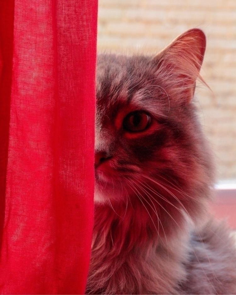 La Chat Rouge - montreal, cats, red - mooji | ello