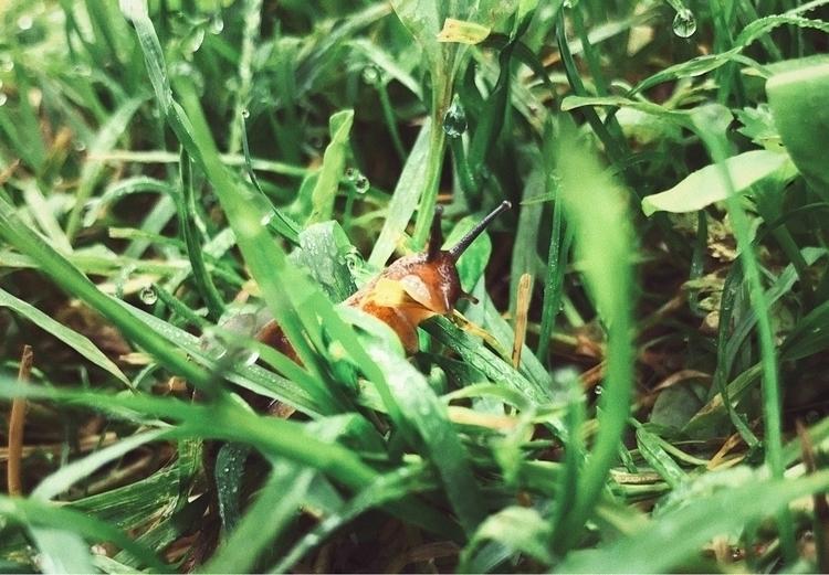 snail, nature, grass, animal - ga1ahad | ello