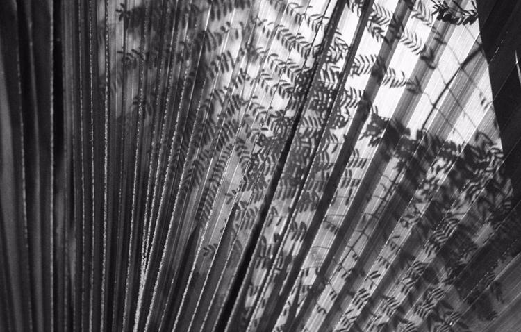 Moving sunset andshadows - 35mmfilm - estebanabdala | ello