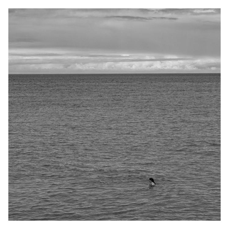 Lonely swimmer - guillermoalvarez | ello