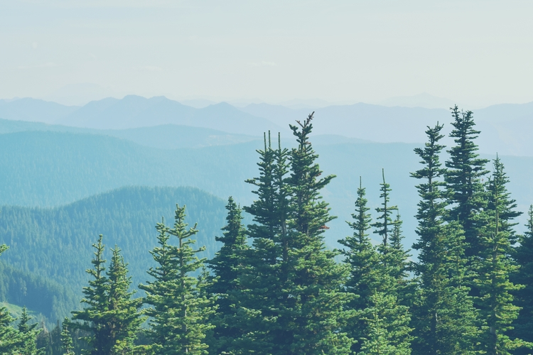 Mount Rainier National Park fir - cokes | ello