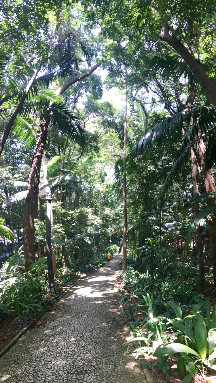 Trilha Parque Trianon em São Pa - antoniomg   ello