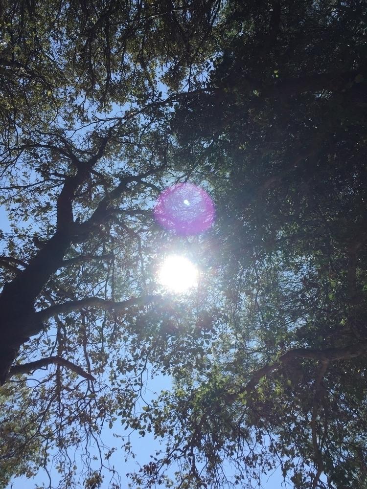 se Schatten Bäume - moellus | ello