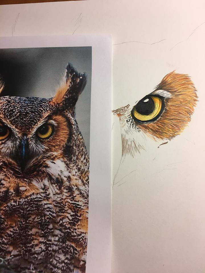 happy owl drawing, started favo - crayola4kids | ello