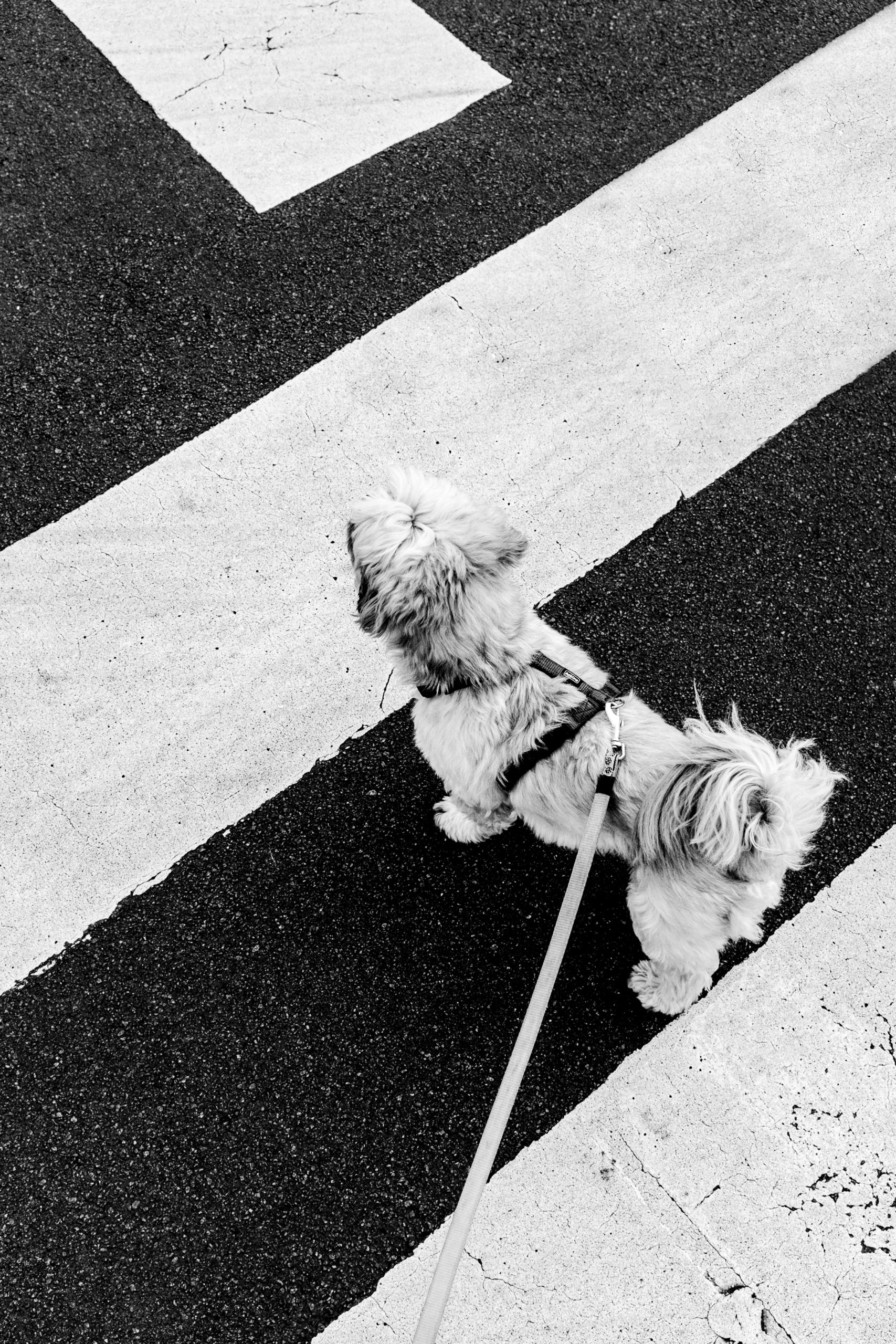 Walking Dog - ellominimal, Geometric - jinghels | ello
