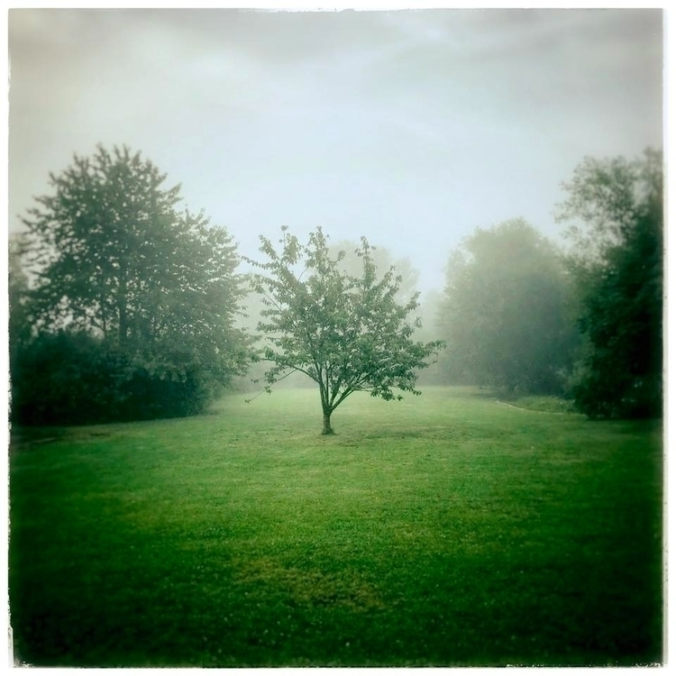 mist, morning, treesinthefog - willkreutz | ello