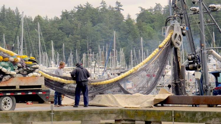 Loading fish nets Anacortes, Wa - dave63 | ello