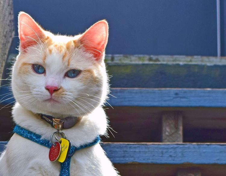 Coho handsome, photo - cat, blue - f-delancey | ello