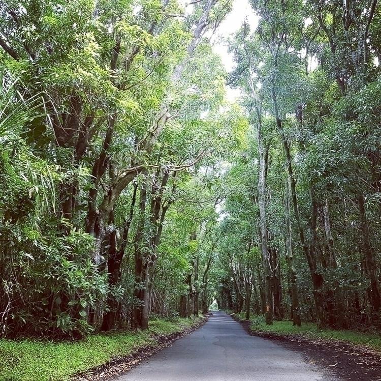 Road trippin beautiful trees co - thereshegoesnow   ello