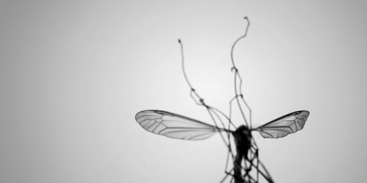 crane fly flickr gallery - photography - salz | ello