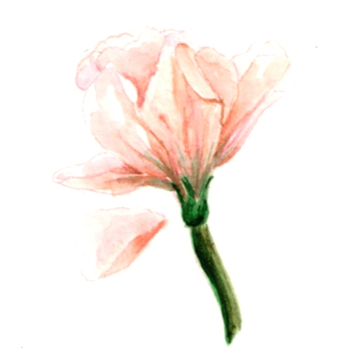 Flower Study - study, painting, watercolours - j0eyg1rl | ello