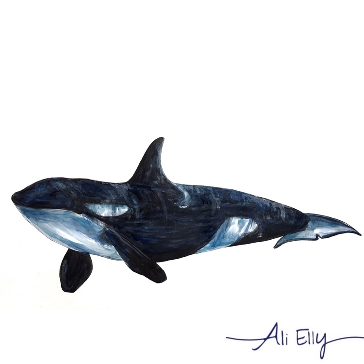orca, illustration, pattern, texture - aliellydesign | ello