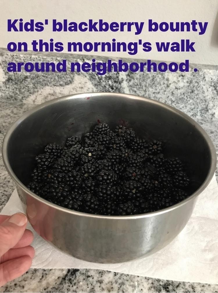 Blackberry season full swing - wuu - leapingbluehare | ello