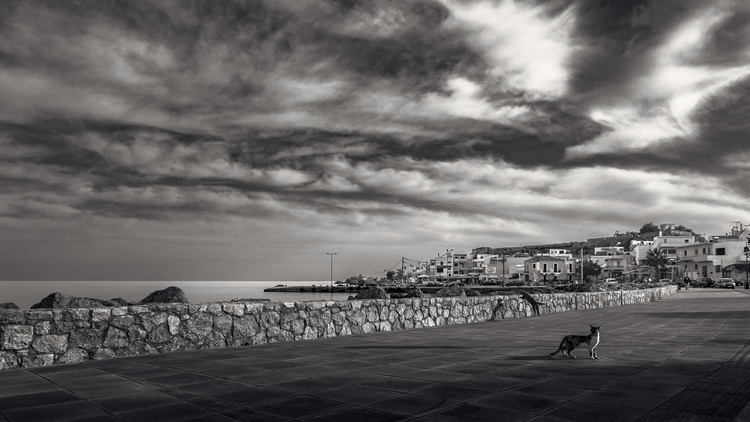 crete, greece, cats, sunset, monochrome - julian_k | ello