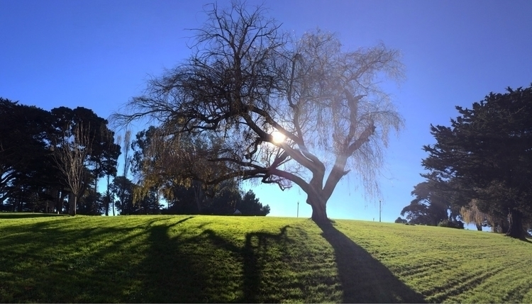 pano, sanfrancisco, tree, love - cs8shoots | ello