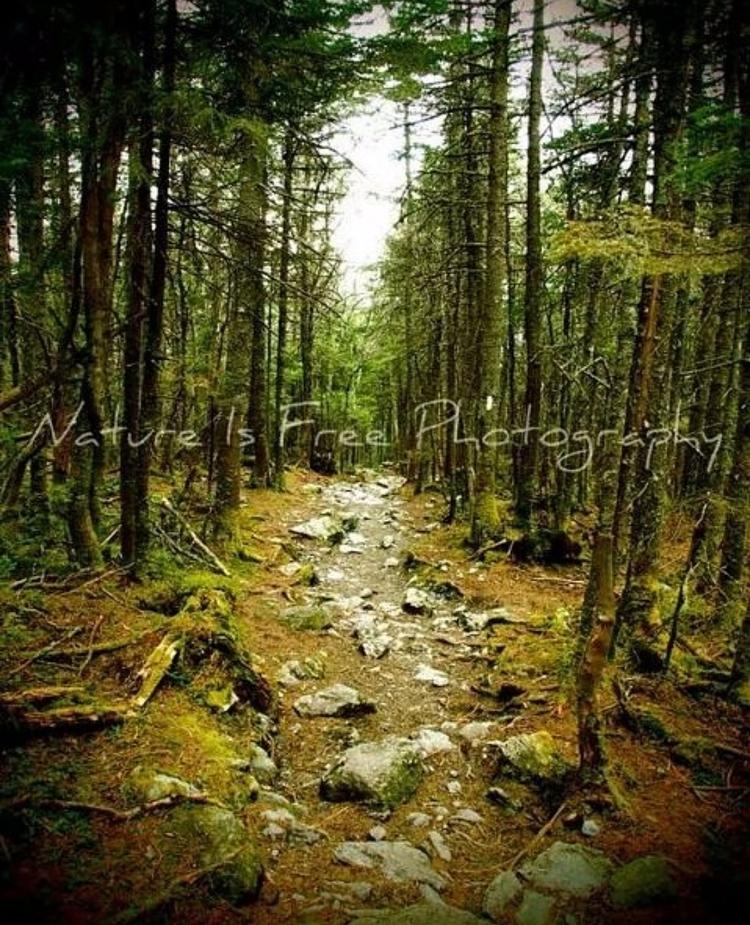 greatest adventure lies Tolkien - natureisfree | ello