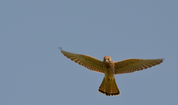 birds, birdphotography, birdsofprey - annettespics | ello