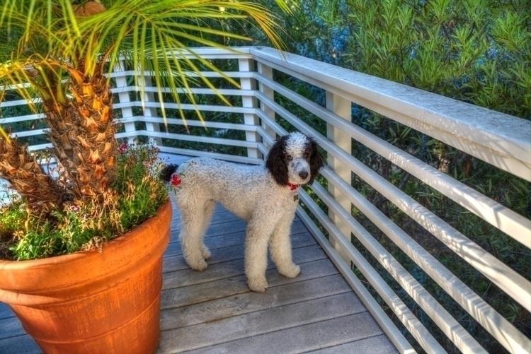 gift dogs - ellomaggie | ello