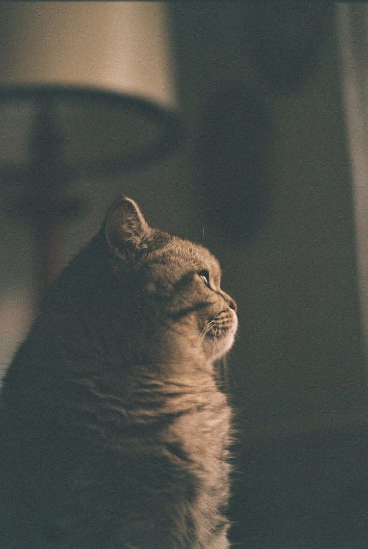 Cat photo alert! film photograp - flommeunier | ello