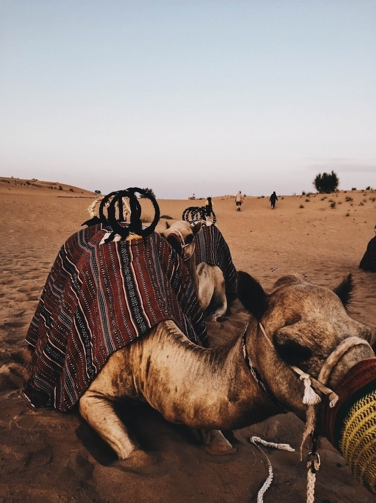 Camel plains - travel, photography - elicottrell | ello