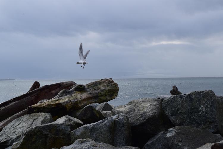 flight - nature, photography, beach - f-delancey   ello