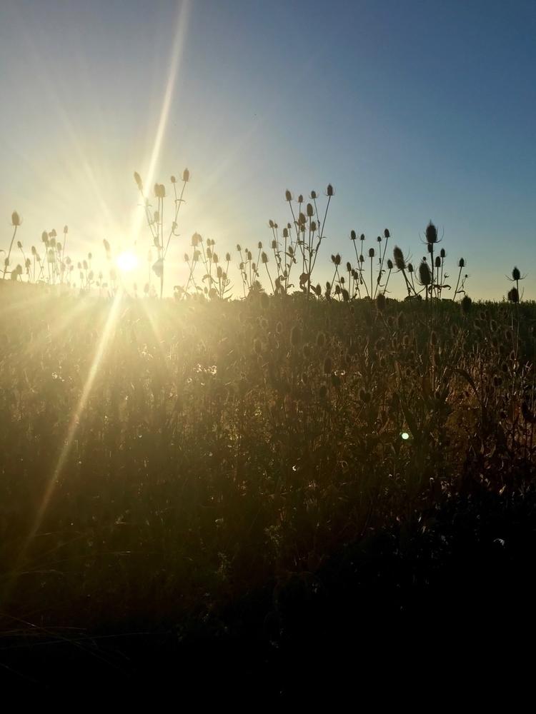 Dawn patrol - philip_higgins | ello