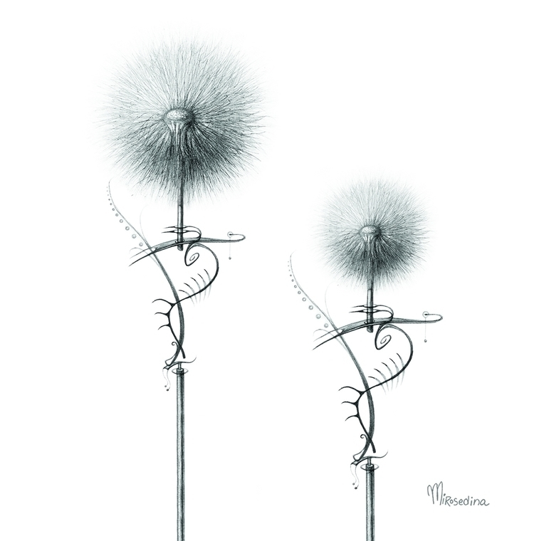 dandelion** series colors desig - mirosedina | ello