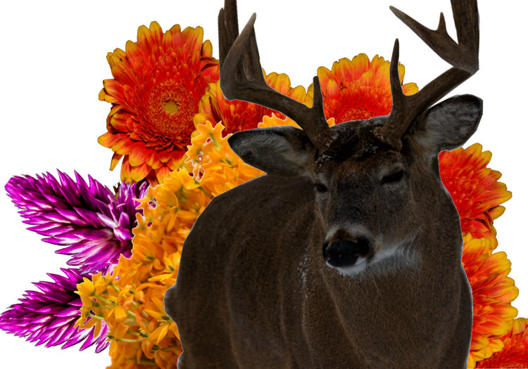 original deer flower collage - aantlion | ello