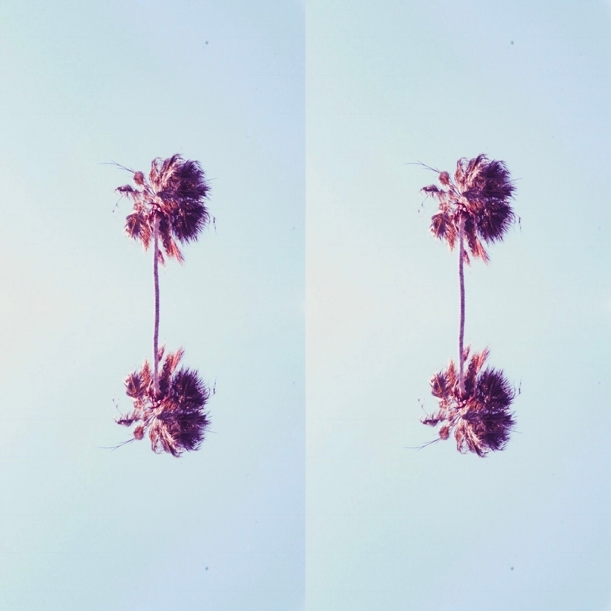 favourite design - nature, palm - spacesbeats | ello