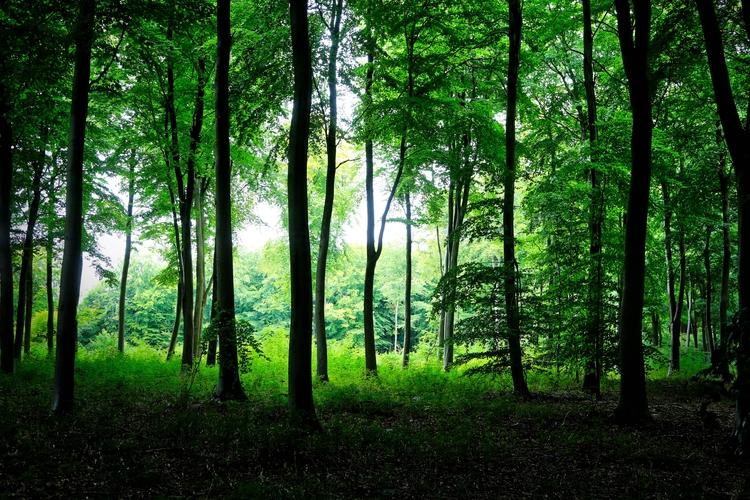 forest - dominicy | ello