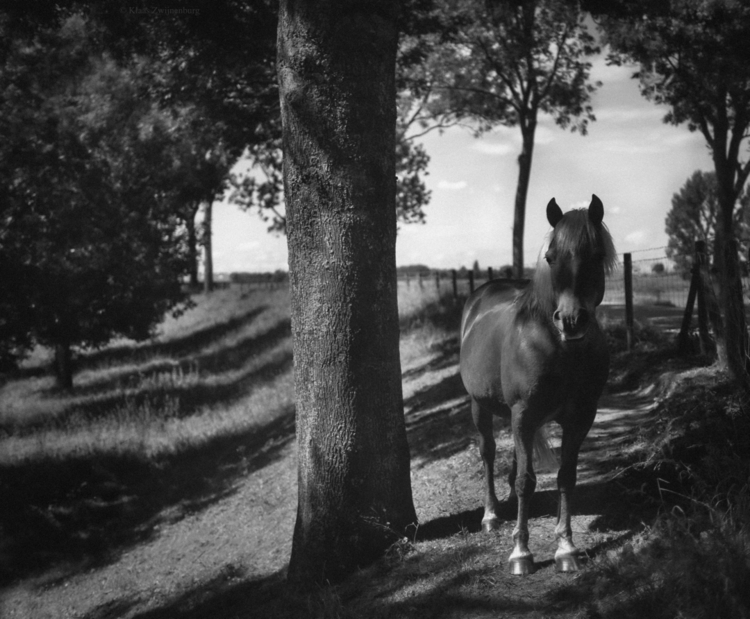 animals, blackandwhite, horse - klaasphoto | ello