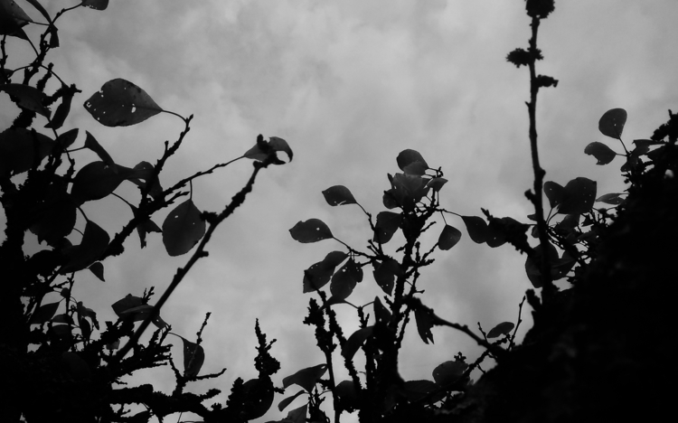 leaves, dark, darksoul, lithuania - beheroght | ello