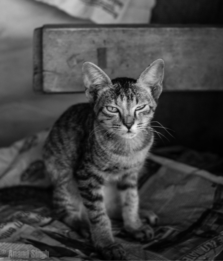cat, kitty, nikon, street, streetphotography - serprent | ello