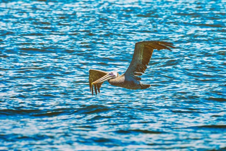 radar Maria Island - pelican, Anna - christofkessemeier | ello