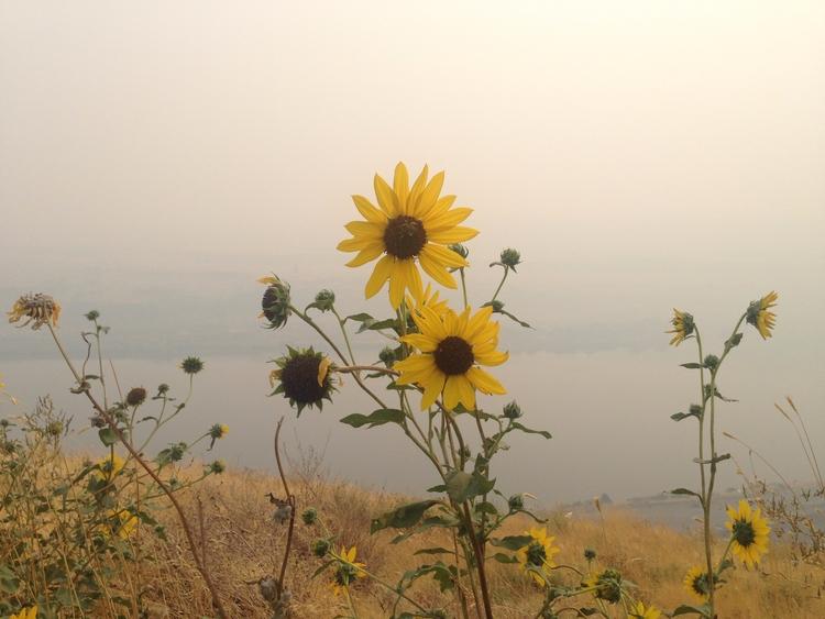 Columbia Gorge - smoke fire riv - joeanybody | ello