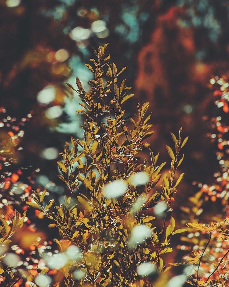 Early fall colour palette. - pa - palegrain | ello