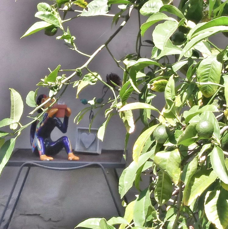 Monkey Lemon Tree - melissadawn | ello