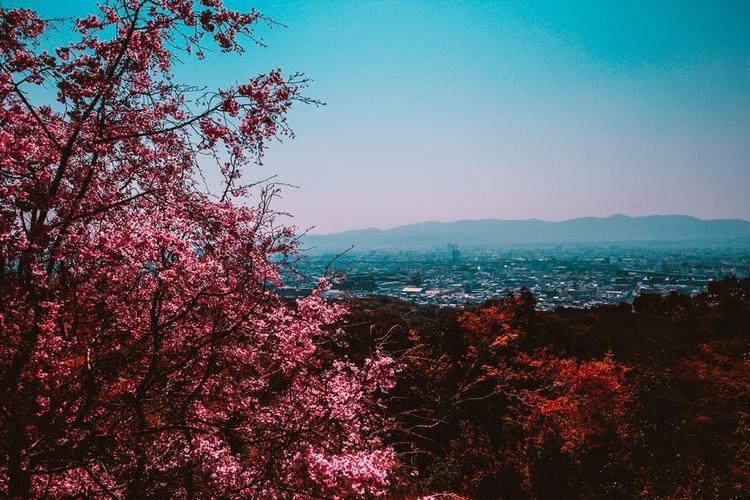 Lone - Cherry Blossoms Eye Repr - roquane | ello