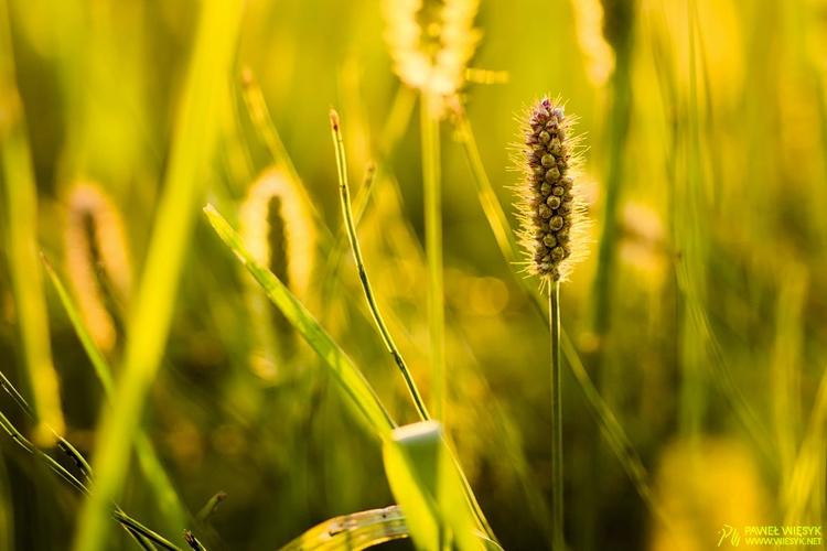 Grass - photography, photo, nature - pawelwiesyk | ello