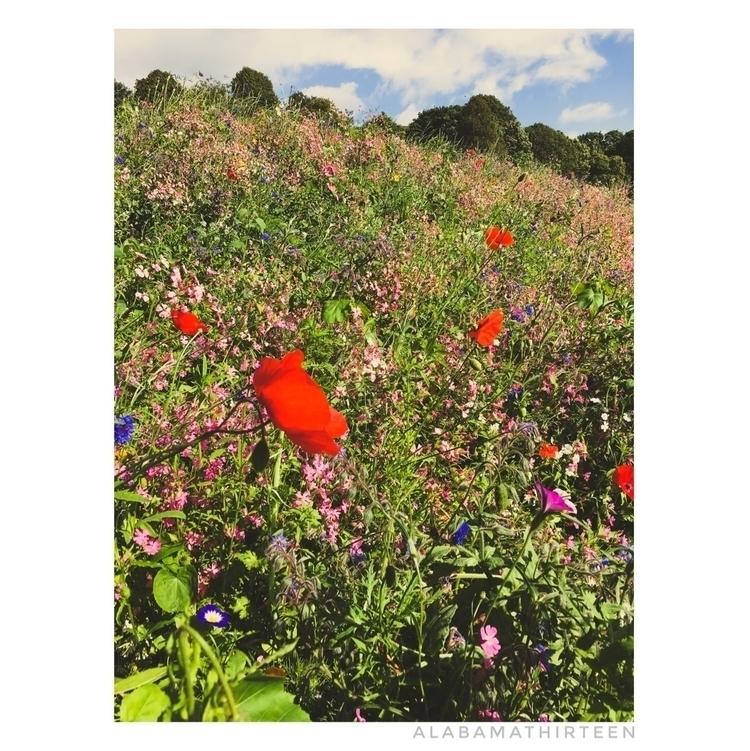 Wildflowers | 110917 - wildflowers - alabamathirteen | ello
