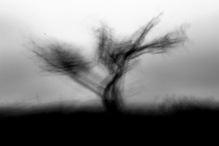 Rising tree. Dona Maria-Portrai - dennermac | ello